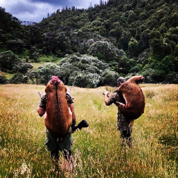 Public Land Meat Hunt, Central North Island NZ