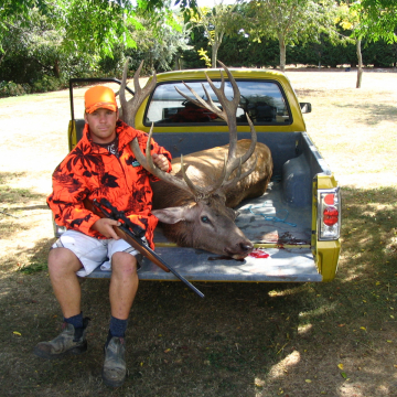 19Pt Red Stag
