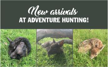 New Arrivals at Adventure Hunting